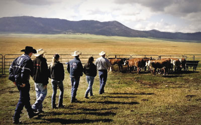 Ron Gill, a U.S. Beef Academy instructor, works with students to prepare a group of heifers for low-stress cattle handling techniques at New Mexico's Valles Caldera National Preserve.